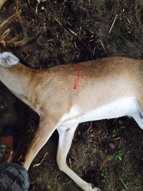 NICE BUCK SHOT BY LANCE